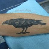 1-a-anim-crow-avant-bras