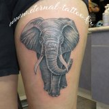 1-a-anim-elephant-cuisse