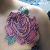 1-a-old-rose-1